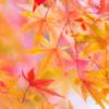 11月の祭(年中行事)【酉の市・七五三】